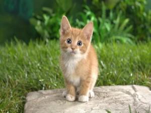 Postal: Dulce gatito sobre una roca