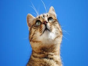 Un gato mirando hacia arriba