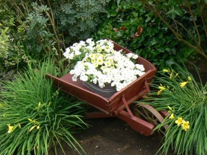 Petunias en una carretilla