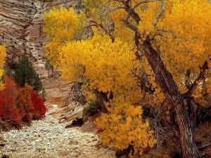 Postal: Árboles otoñales sobre un suelo rocoso