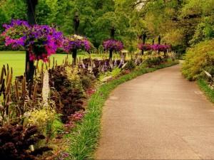Postal: Flores y arbustos a lo largo de un camino