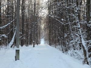 Postal: Camino entre árboles invernales