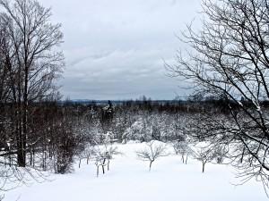 Pequeños y grandes árboles sobre la nieve