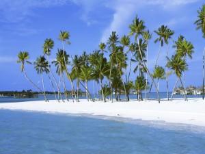 Postal: Verdes palmeras sobre la arena de una playa