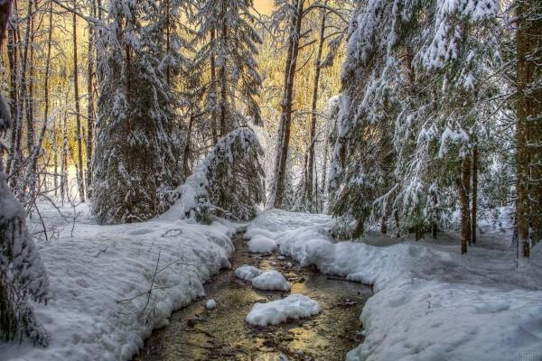 Fría nieve sobre los árboles y el río
