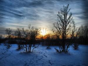 Árboles sobre la nieve al amanecer