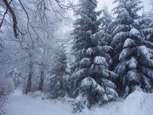 Postal: Señalización en el tronco de un árbol cubierto de nieve