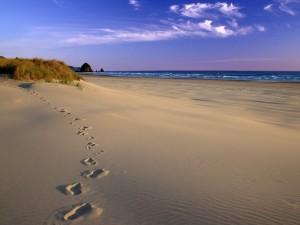 Postal: Pisadas sobre la arena de una playa
