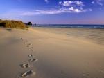 Pisadas sobre la arena de una playa