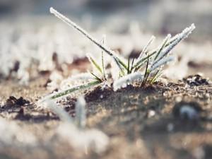 Briznas de hierba heladas