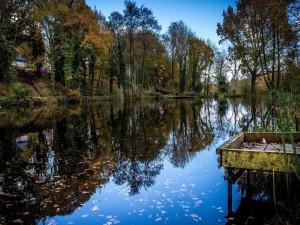 Postal: Árboles a lo largo del río