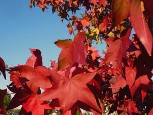 Postal: Hojas de otoño