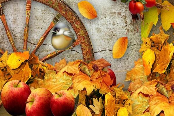 Pájaro entre hojas y manzanas de otoño