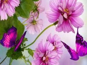 Postal: Bellas mariposas y flores