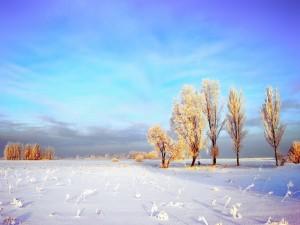 Paraje natural en invierno