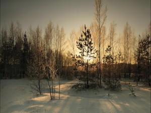 Postal: Día soleado de invierno
