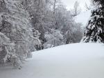 Árboles y nieve