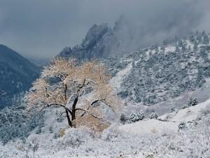 Niebla y nieve en las montañas