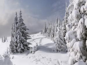 Nieve cubriendo las ramas de unos pinos