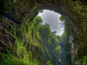 Arco y pared rocosa cubiertos de plantas y árboles verdes