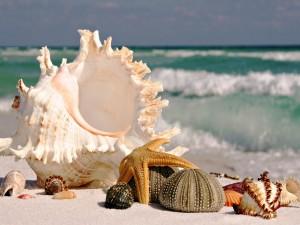 Postal: Estrella de mar, erizos y caracolas sobre la arena