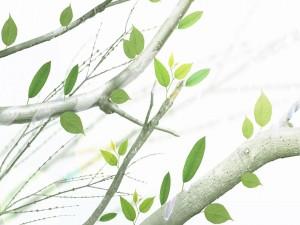 Postal: Hojas verdes en ramas de árbol