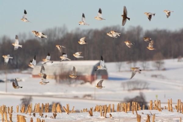 Grupo de aves volando sobre la nieve