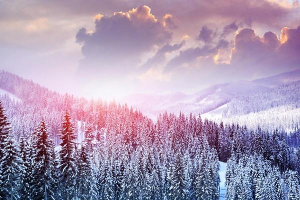 Nieve en un bosque de pinos