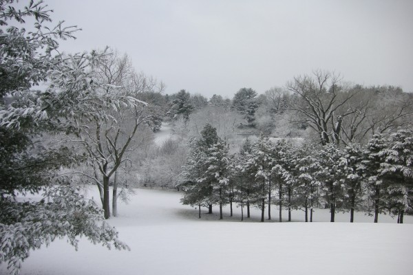 Arboleda cubierta de nieve
