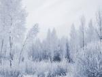 Árboles en un frío invierno