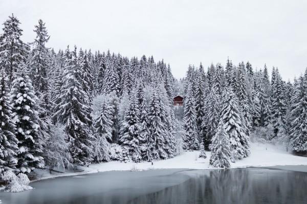 Cabaña entre los pinos nevados