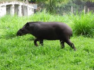 Animal caminando sobre la hierba