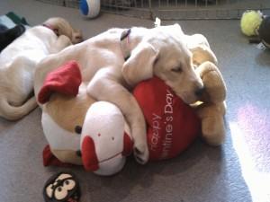 Postal: Perro dormido sobre un gran peluche