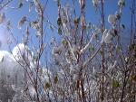 Hojas y nieve sobre las ramas de los árboles