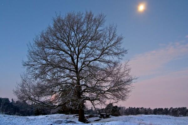 Banco junto a un árbol en un paisaje nevado