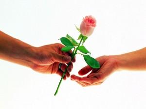 Postal: Una rosa de amor