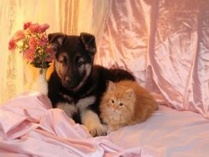 Perro y gato juntos en una cama