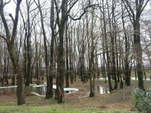 Árboles húmedos tras la lluvia