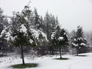 Postal: Nieve cayendo sobre los árboles