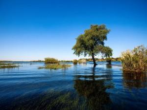 Árboles y plantas en el agua