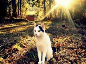 Postal: Gato sentado en un jardín otoñal