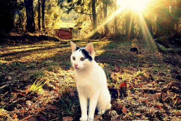 Gato sentado en un jardín otoñal
