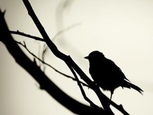 Postal: Silueta de un pájaro sobre una rama