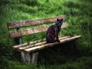 Hermoso gato oscuro sentado en un banco de madera