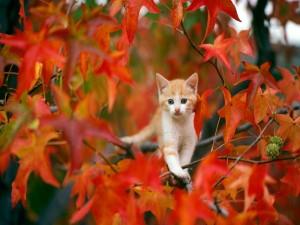 Gatito paseando sobre las ramas de un árbol otoñal