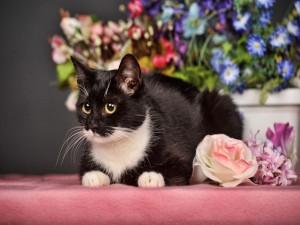 Postal: Gatito rodeado de flores de colores