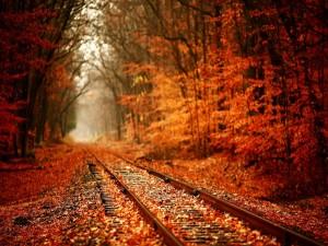 Hojas secas sobre las vías del tren