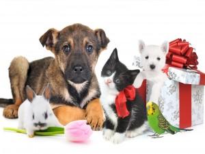 Postal: Bellas mascotas