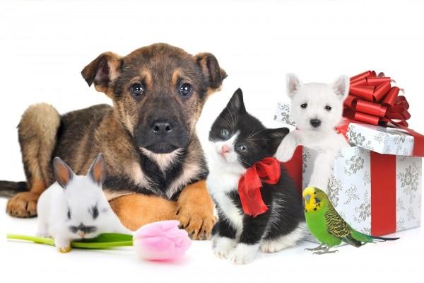 Bellas mascotas