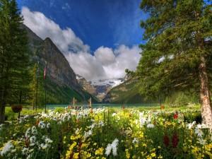 Postal: Primavera en un lago